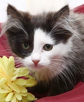 котик пугливый